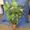 Round Pot Silk Plant