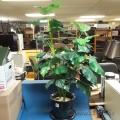 "48"" Artificial Silk Ficus Plant With Ceramic Pot"