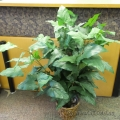 """48"""" Artificial Silk Ficus Plant With Wicker Pot"""