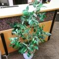 Artificial Silk Plant w/ White Plastic Base
