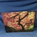Extending Branches Hanging Canvas Wall Art 40x30